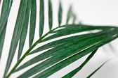Palms on White — Stock Photo