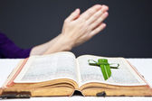 Palm Cross and Bible — Stock Photo