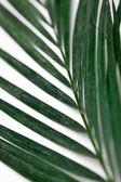 Palms on White — Stock Photo