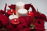 Poinsettia Centerpiece — Stock Photo