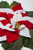 Atatürk çiçeği yaprağı — Stok fotoğraf
