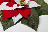 Vánoční hvězda listí — Stock fotografie
