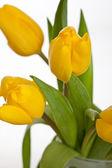 Yellow Tulips — Stock fotografie