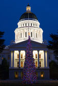 Capitol Christmas Tree — Stock Photo