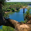 Tree over American River — Stock Photo
