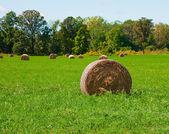 Rolls of hay — Stock Photo