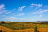 Napa valley — Stockfoto