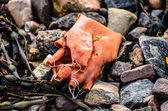 Old and decayed rubber glove — Stock Photo