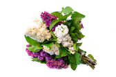 Mix of purple and white common lilac (syringa) bouquet isolated  — Stock Photo