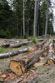 Piles of timber along road in forest — Stock Photo