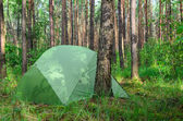 Hidden in forest pitched tent - example of stealth camping — Stock Photo