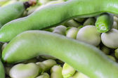 Closeup of broad bean - background, texture — Stock Photo