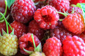 Closeup of multiple raspberries — Stock Photo