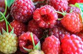 Closeup of multiple raspberries — Stok fotoğraf