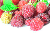 Closeup of multiple raspberries isolated on white background — Stock Photo