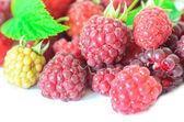 孤立的白色背景上的多个树莓的特写 — 图库照片