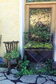 Ornamental plants on wall — Stock Photo