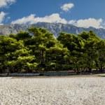 Beach Croatia — Stock Photo #47438303