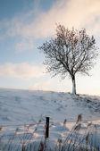 árvore solitária no monte nevado — Fotografia Stock