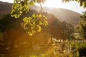 Backlit leaves in summer — Stock Photo