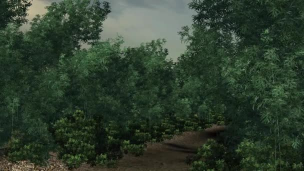 Bosque de bambú. — Vídeo de stock
