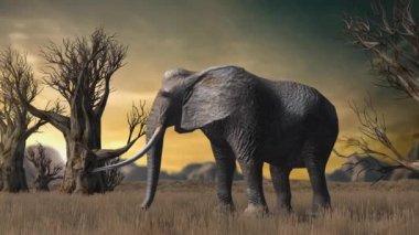 Elephant in savanna — Stock Video
