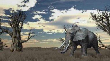Elephant walks through savanna — Stock Video