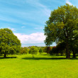 Stock Photo: Field of grass and trees
