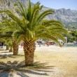 Palms with big green leaves on the european beach on sunny holiday day, visible port, harbour. — Stock Photo
