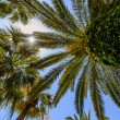 Stock Photo: Exotic palms with big green leaves, photo taken from bottom.