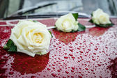 Three white roses on claret car.  — Stock Photo
