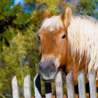 Horse against old wooden fence background. — Stock Photo