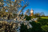 Fleur de cerisier avec bâtiment de ville vivsible. — Photo