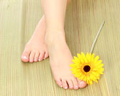 Beauty legs and flower — Stock Photo