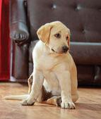 Hond zittend op de vloer — Stockfoto
