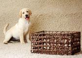 Dog sitting on the floor. — Stockfoto