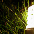 Energy-saving lamp in green grass. — Stock Photo #43130827