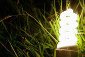 Energy-saving lamp in green grass. — Stock Photo
