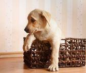 Dog sitting on the floor — Zdjęcie stockowe
