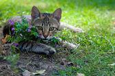 Kitten with flowers — Stock Photo