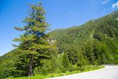 Mountains view — Stock Photo