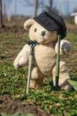Teddy bear with gardening tools — Stock Photo