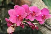 Flora e founa — Fotografia Stock