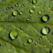 Raindrops on green leaves — Stock Photo #42181557