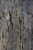 Decayed timber surface — Stock Photo