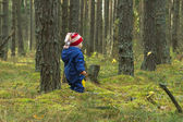 Toddler on a walk in the pine forest — Stock Photo