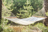 Fabric hammock strung between two pines in forest — Stock Photo