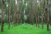 Albero nella foresta — Foto Stock