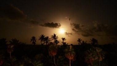 Moon night in tropical jungle of Yucatan Peninsula, Mexico — Stock Video