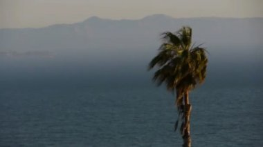 Elegant palm trees and tanker ship — Stock Video